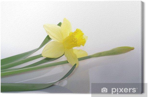 Obraz na płótnie Żonkil - Pory roku