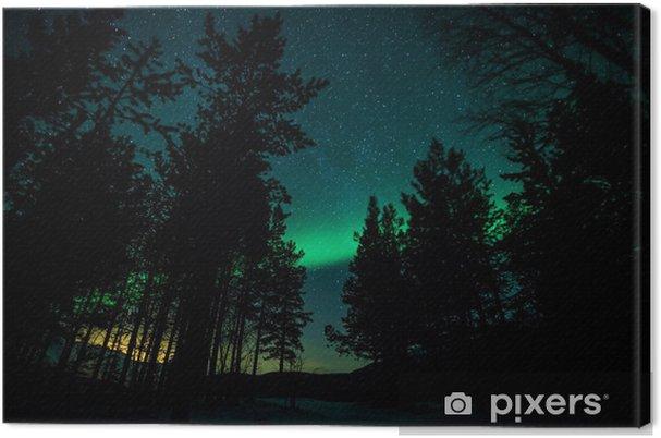 Obraz na płótnie Zorza polarna nad drzewami w Szwecji - Tematy