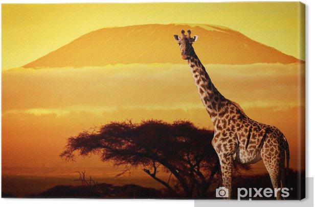 Obraz na płótnie Żyrafa na sawannie. Kilimandżaro na zachodzie słońca. Safari - Tematy