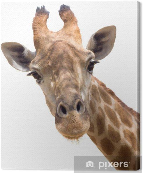 Obraz na płótnie Żyrafa z bliska - Naklejki na ścianę