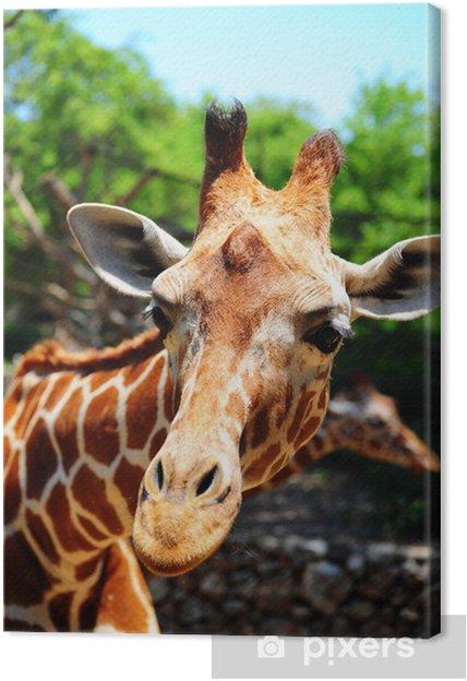 Obraz na płótnie Żyrafa - Tematy