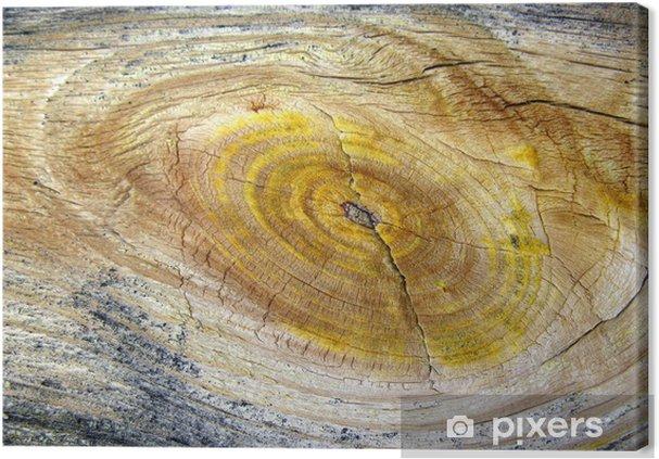 Obraz na płótnie Żywica w drewnie - Fichtenharz - Tematy