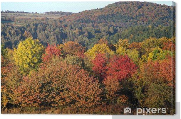 Obraz na płótnie Żywy kolor jesień las - Pory roku