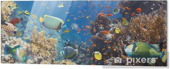 Obraz na szkle Koral i ryb - Ryby