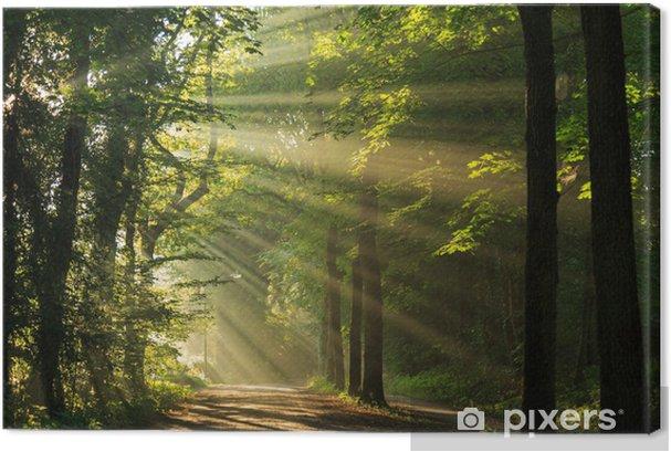Obrazy premium Promienie słońca przecinające las - Tematy