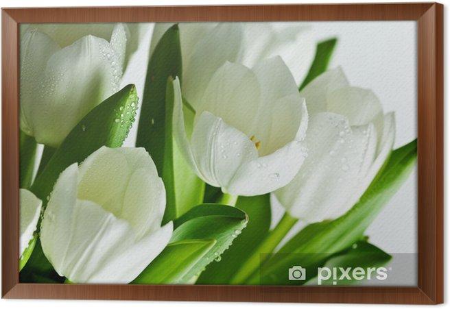Rámovaný obraz na plátně Bílé tulipány - Témata