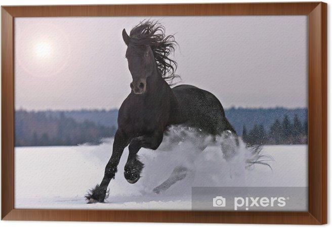 Rámovaný obraz na plátně Frisian koně na sněhu - Témata