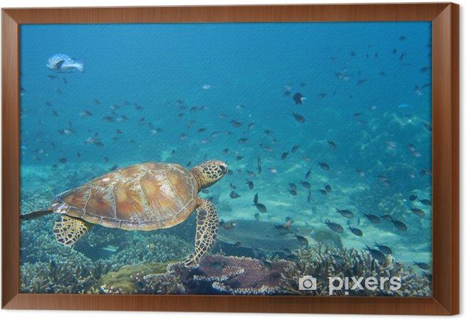 Rámovaný obraz na plátně Mořská želva portrét zblízka, zatímco na tebe dívá - Ryby