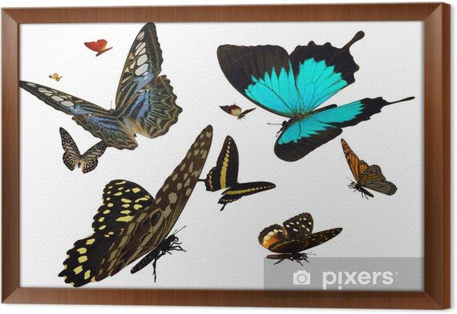 Rámovaný obraz na plátně Motýli - Ostatní Ostatní