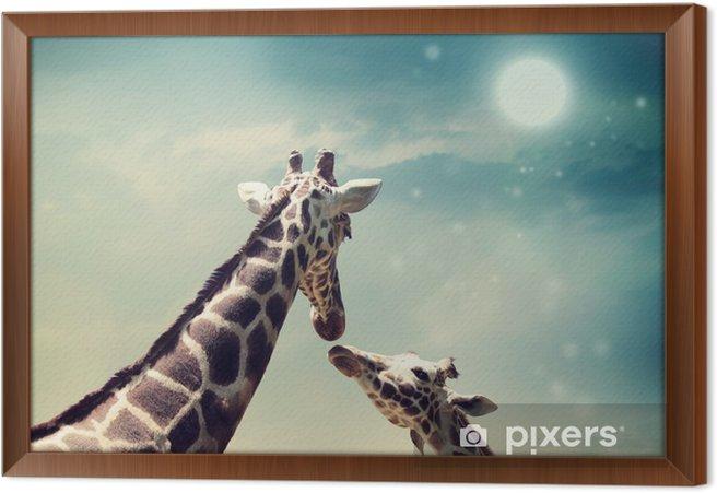 Rámovaný obraz na plátně Žirafy v přátelství nebo láska pojetí obrazu - Žirafy