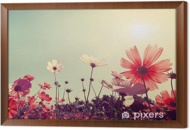 Obraz na płótnie w ramie Archiwalne krajobrazu przyrody tle Piękny kwiat Cosmos polu na niebo z promieni słonecznych. Kolor retro efekt filtra tonu - Rośliny i kwiaty