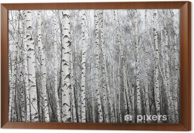 Obraz na płótnie w ramie Brzozowy las, czarno-białe zdjęcie - Krajobrazy