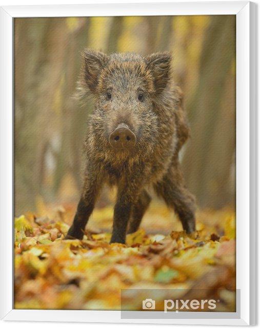 Obraz na płótnie w ramie Dzika świnia - Ssaki