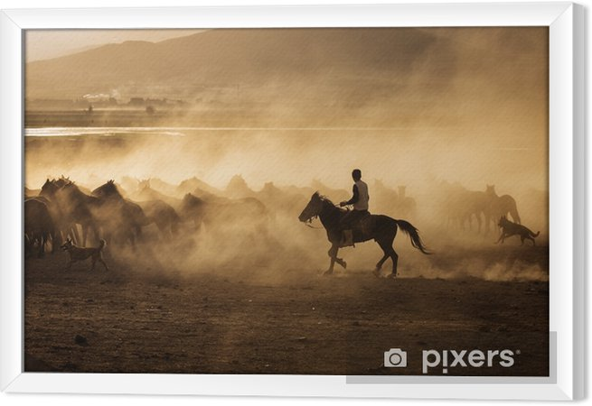 Obraz na płótnie w ramie Dzikie konie w Kapadocji o zachodzie słońca z pięknymi piaskami, biegnące i prowadzone przez cawboy - Podróże