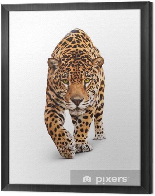 Obraz na płótnie w ramie Jaguar - widok z przodu zwierzę, na białym tle, cień - Naklejki na ścianę