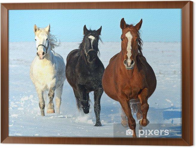 Obraz na płótnie w ramie Koń - Tematy