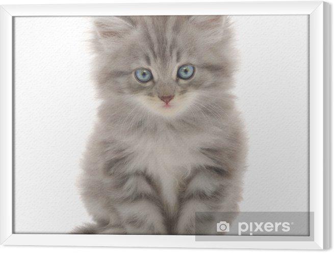 Obraz na płótnie w ramie Kotek na białym tle - Ssaki