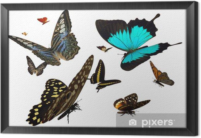 Obraz na płótnie w ramie Motyle - Inne Inne