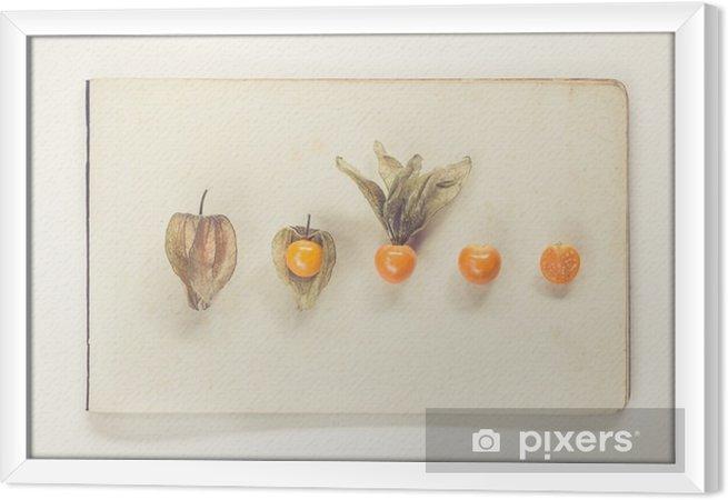 Obraz na płótnie w ramie Physalis leżącego na arkuszach papieru rocznika - naturalna historia styl książki - Jedzenie