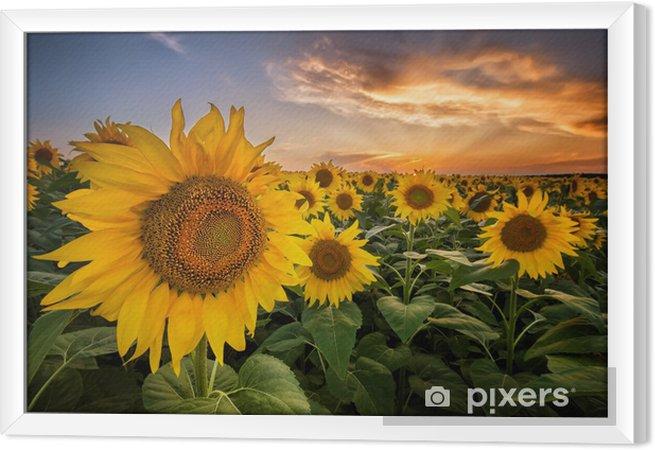 Obraz na płótnie w ramie Piękny zachód słońca nad polem słonecznika - Tematy