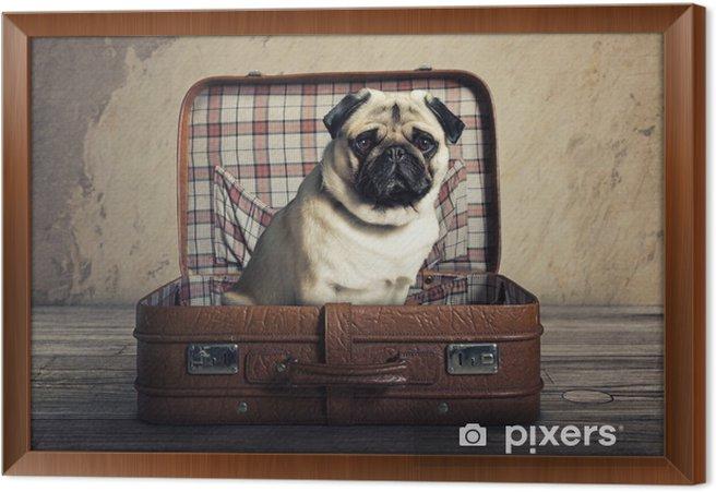 Obraz na płótnie w ramie Pies w sprawie - Mopsy