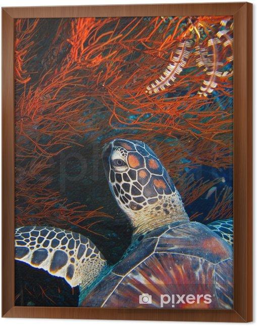 Obraz na płótnie w ramie Podwodny - Obrazy i plakaty Zwierzęta
