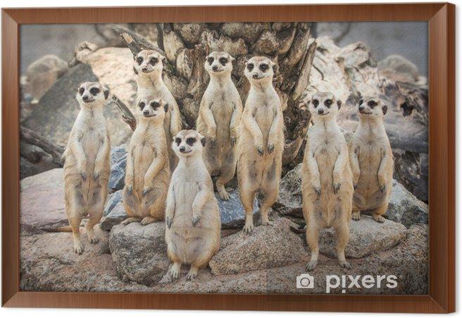 Obraz na płótnie w ramie Portret meerkat - Ssaki
