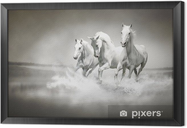 Obraz na płótnie w ramie Stado białych koni biegnących przez wody - iStaging