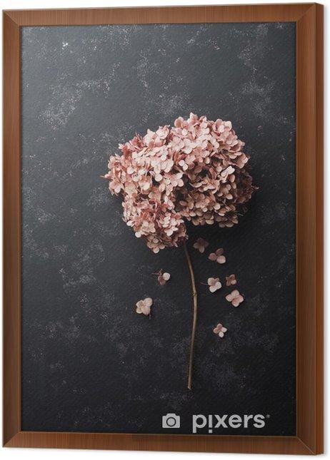 Obraz na płótnie w ramie Suszone kwiaty hortensji na czarnym rocznika tabeli widoku z góry. Płaski lay stylizacji. - Rośliny i kwiaty