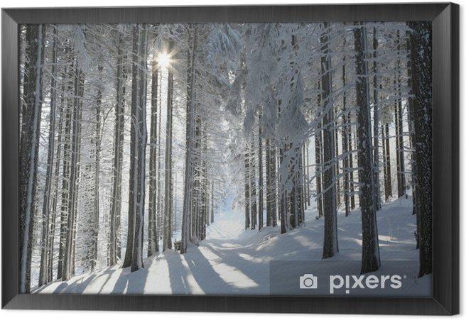 Obraz na płótnie w ramie Szlak wśród lasów oszronionych drzew sosnowych - Tematy
