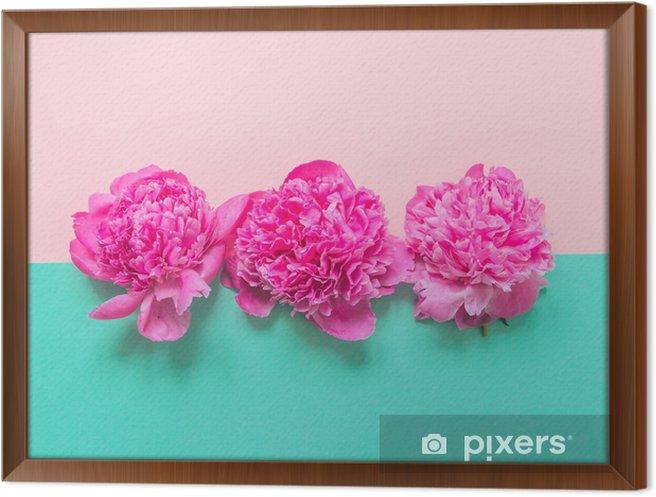 Obraz na płótnie w ramie Trzy pąki piwonii na różowym i turkusowym tle. moda minimalna koncepcja piękna - Rośliny i kwiaty