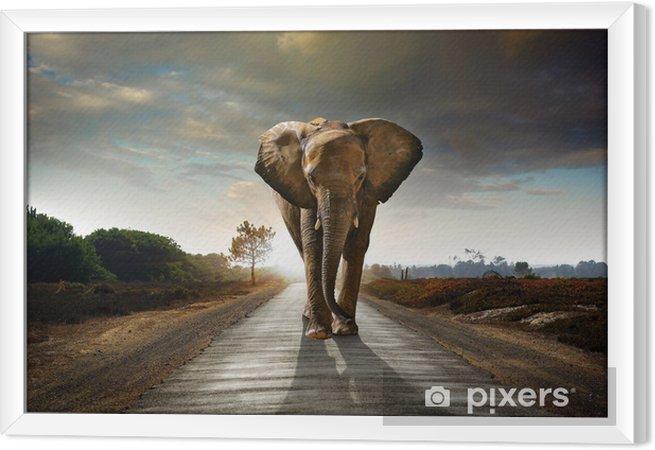 Obraz na płótnie w ramie Walking słonia - Słonie