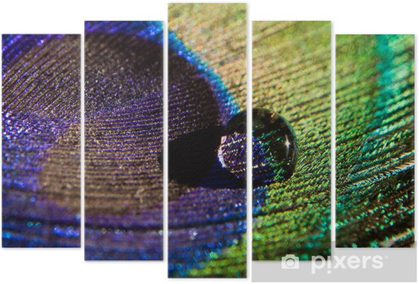 water drop on peacock feather Pentaptych - Birds