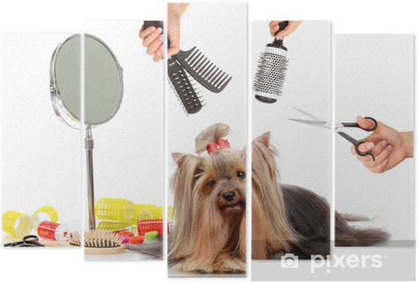 Yorkshire Terrier Grooming At The Salon For Dogs Pentaptych Pixers