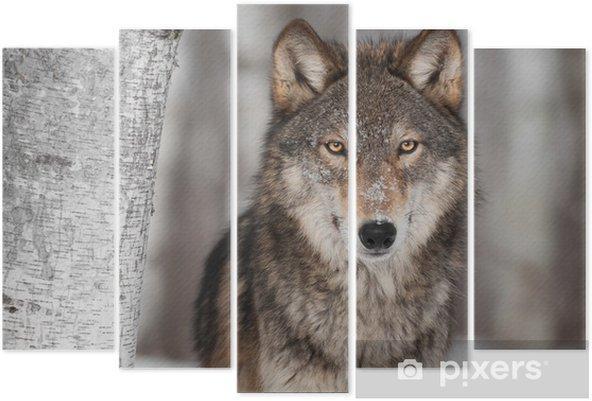 Pentaptyk Grey Wolf (Canis lupus) Obok Birch Tree - Style