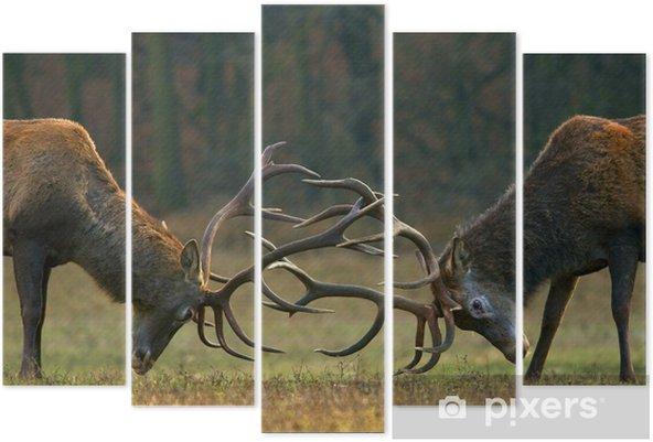 Pentaptyk Red walka jelenia - Zwierzęta