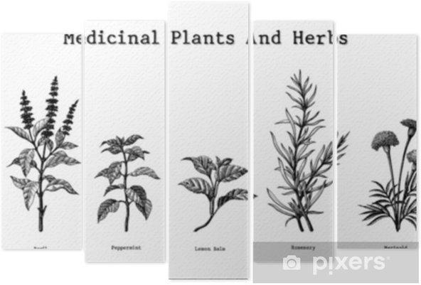 Pentaptyk Rośliny lecznicze i zioła rysunek ręka rocznika Grawerowanie ilustracji - Rośliny i kwiaty