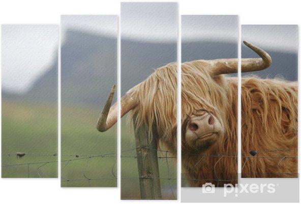 Pentaptyk Szkocka krowa wyżynna - Ssaki