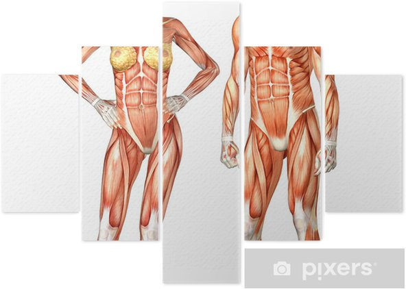 Anatomie Corps Humain Femme pentaptyque anatomie du corps humain - homme et femme • pixers