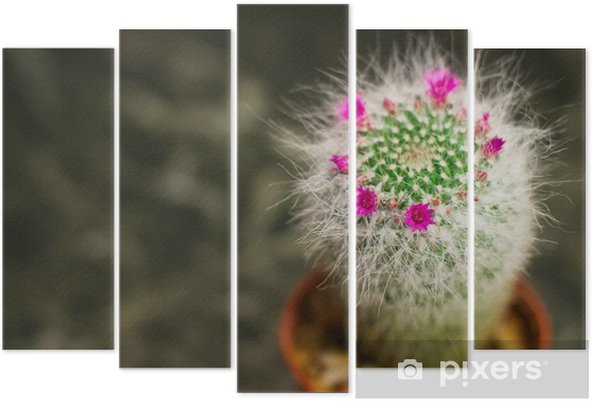 Pentaptyque Gros Plan D Un Cactus Avec Fleur Rose Mammillaria