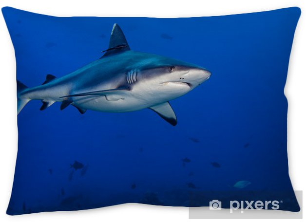 f5f9dd536c58 shark attack underwater Pillow Cover • Pixers® • We live to change
