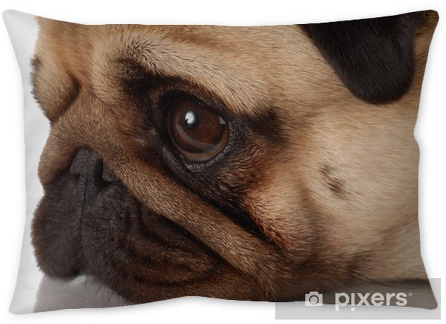 side profile of a pug dog face on white background Pillow Cover ... 329b566d6f43