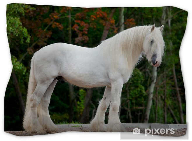 White Shire Horse Standing Near The Spring Forest Pillow Sham Themes