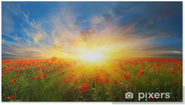 Цветы на полях Plakat -