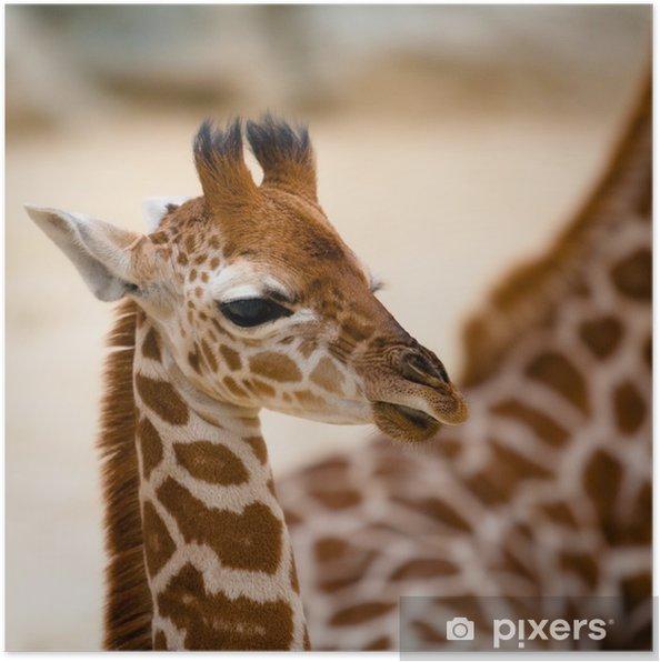 Kendte Baby giraf Plakat • Pixers® - Vi lever for forandringer IQ-01