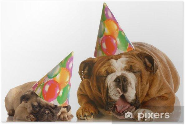 Plakat Bulldog og en pug iført bursdagshatter klager • Pixers® - Vi ... 2dcab50d29408