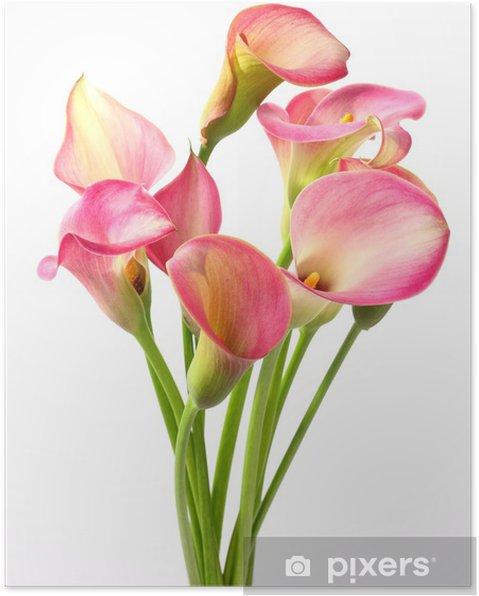 646f71e977c Callas blomster Plakat • Pixers® - Vi lever for forandringer