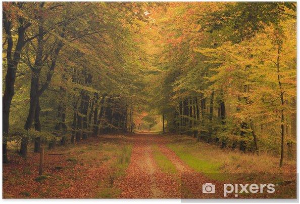a7248a5eccf Efterår farver i skoven Plakat • Pixers® - Vi lever for forandringer