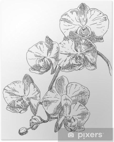 orkide tegning