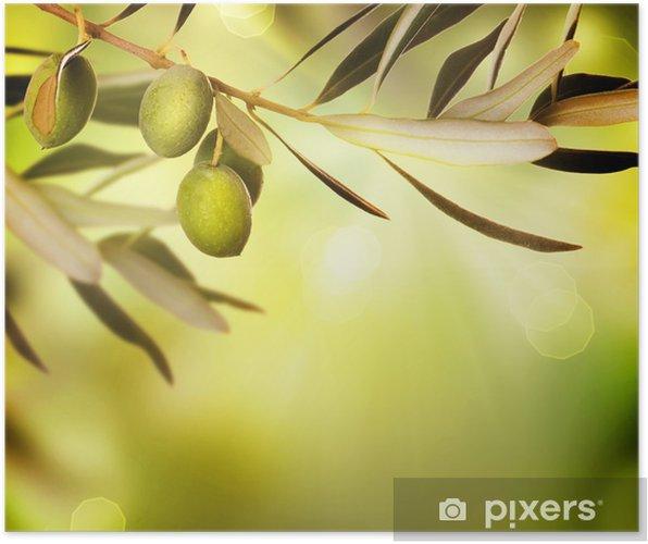 b00773244 Plakat Oliven grense design. Mat bakgrunn